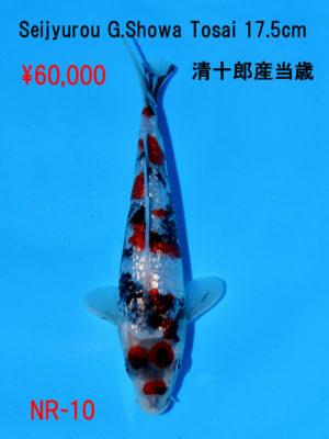 nr-10_60000yen_seijyurou-g-showa-tosai-17-5cm