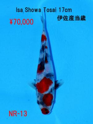 nr-13_70000yen_isa-showa-tosai-17cm-2