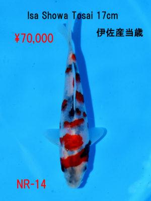 nr-14_70000yen_isa-showa-tosai-17cm