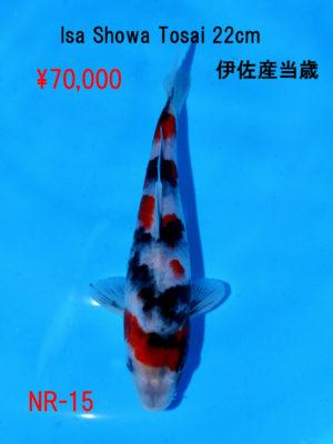 nr-15_70000yen_isa-showa-tosai-22cm