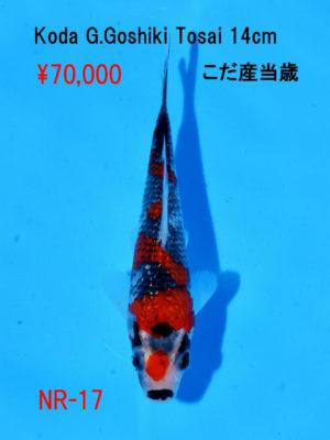 nr-17_70000yen_koda-g-goshiki-tosai-14cm