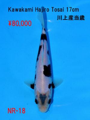 nr-18_80000yen_kawakami-hajiro-tosai-17cm-2