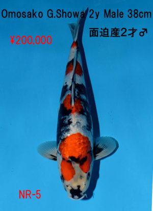 nr-5200000yen_omosako-g-showa-2y-male-38cm