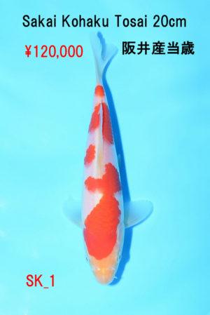 sk-1_120000yen_sakai-kohaku-tosai-20cm_dsc_4658