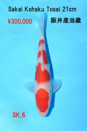 sk-6_300000yen_sakai-kohaku-tosai-21cm_dsc_4680