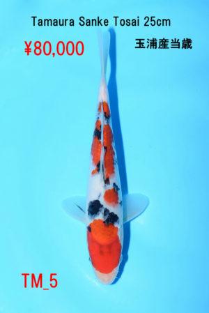 tm-5_80000yen_tamaura-sanke-tosai-25cm_dsc_4745