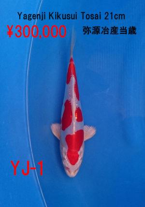 yg-1_300000yen_yagenji-kikusui-tosai-20cm