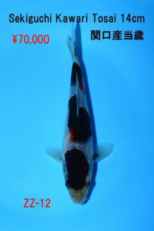 zz-12_50000yen_sekiguchi-kawarigoi-tosai-14cm_dsc_6146
