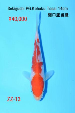 zz-13_40000yen_sekiguchi-pearl-g-kohaku-tosai-14cm_dsc_6166