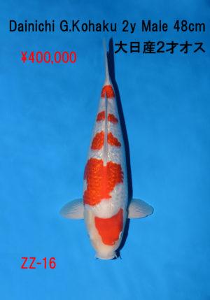 zz-16_400000yen_dainichi-g-kohaku-2y-male-47cm_dsc_6286