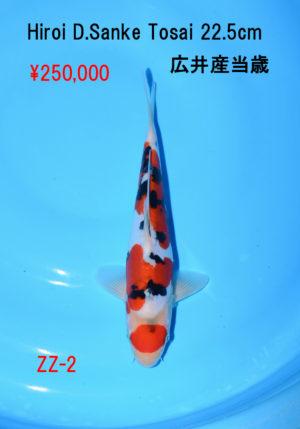 zz-2_250000yen_hiroi-d-sanke-tosai-22-5cm_dsc_6090
