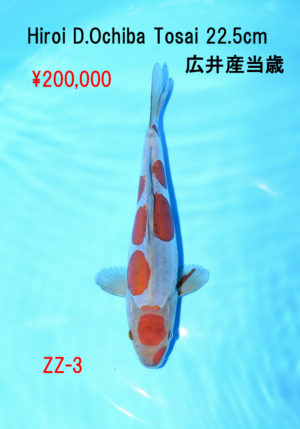 zz-3_200000yen_hiroi-d-ochiba-tosai-22-5cm_dsc_6047