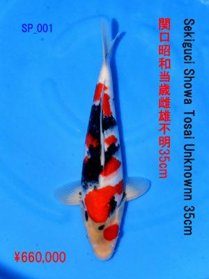 sp_001660000yen_sekiguchi-showa-tosai-unknown-35cm
