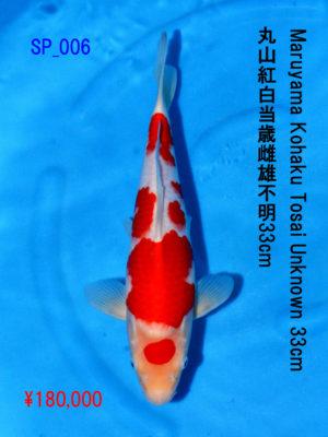 sp_006180000yen_maruyama-koaku-tosai-unknown-33cm