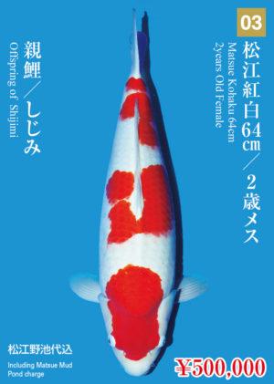 tk2017s_03_matsue_500000_kohaku_2years-old_f_64cm_shijimi