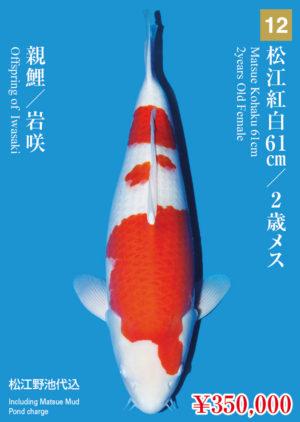 tk2017s_12_matsue_350000_kohaku_2years-old_f_61cm_iwasaki