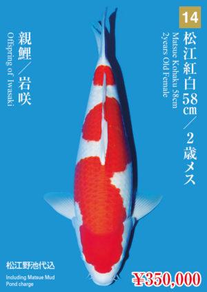 tk2017s_14_matsue_350000_kohaku_2years-old_f_58cm_iwasaki