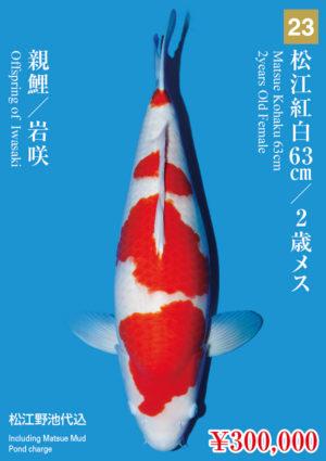 tk2017s_23_matsue_300000_kohaku_2years-old_f_63cm_iwasaki