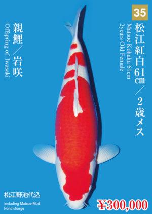 tk2017s_35_matsue_300000_kohaku_2years-old_f_61cm_iwasaki