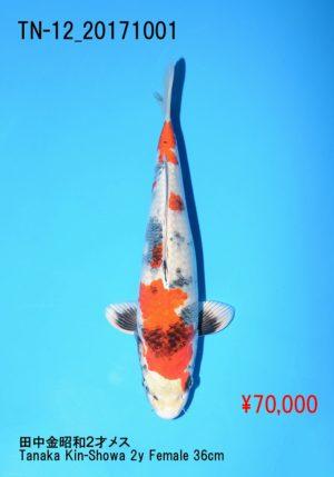 tn-12_70000yentanaka-kinshowa-2y-f-36%e3%8e%9d_dsc_9244