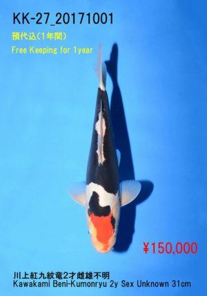 kk-27_150000yenkawakami-beni-kumonryu-2y-sex-unknown-31cm_dsc_0412