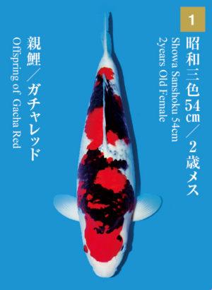 dainichikai2017_01