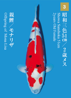 dainichikai2017_03