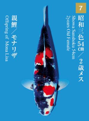 dainichikai2017_07