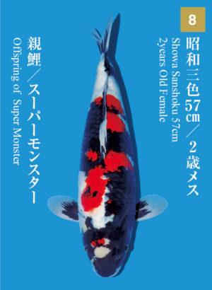 dainichikai2017_08