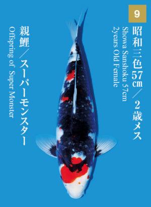 dainichikai2017_09