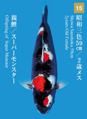 dainichikai2017_15