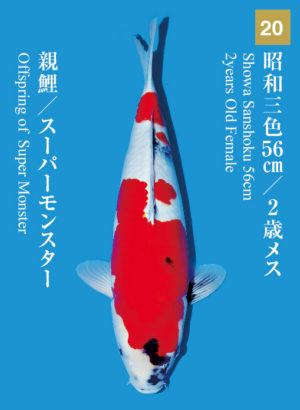 dainichikai2017_20