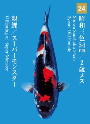 dainichikai2017_24
