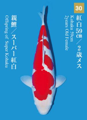 dainichikai2017_30