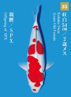 dainichikai2017_33