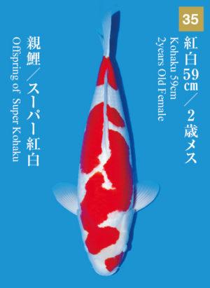 dainichikai2017_35