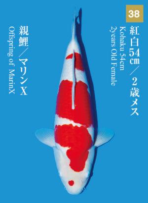 dainichikai2017_38
