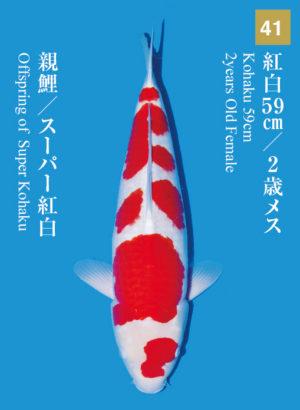 dainichikai2017_41