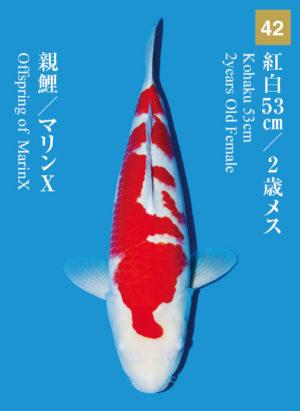 dainichikai2017_42