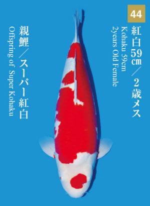 dainichikai2017_44