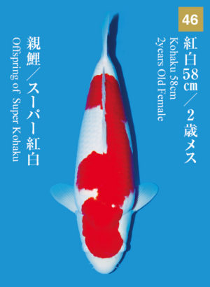 dainichikai2017_46