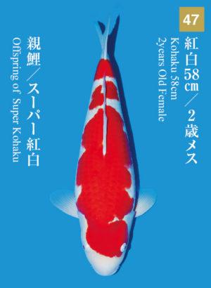 dainichikai2017_47