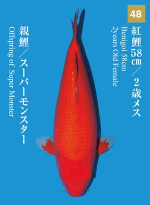 dainichikai2017_48