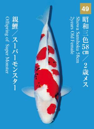 dainichikai2017_49