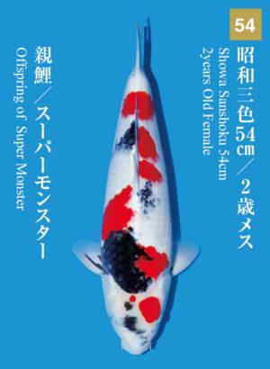 dainichikai2017_54