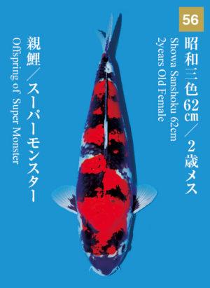 dainichikai2017_56
