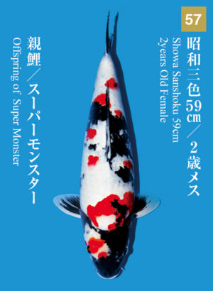 dainichikai2017_57