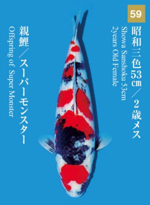 dainichikai2017_59