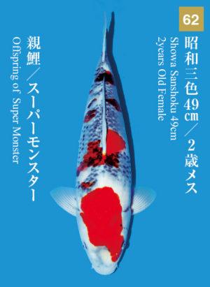 dainichikai2017_62