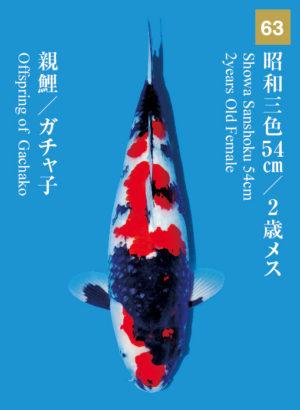 dainichikai2017_63